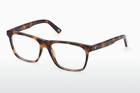 Designer briller Web Eyewear WE5352 056